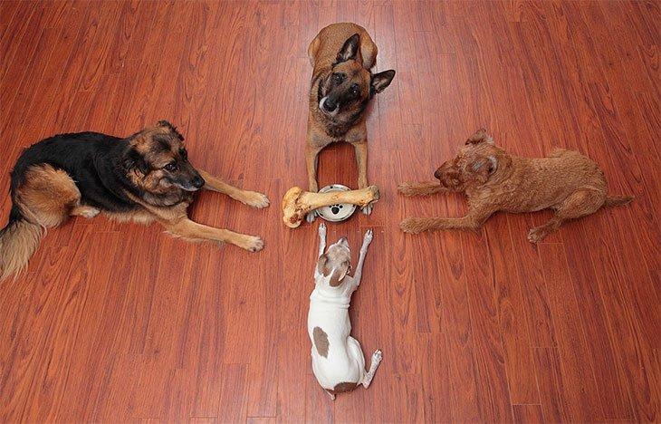 good dog food for greyhounds